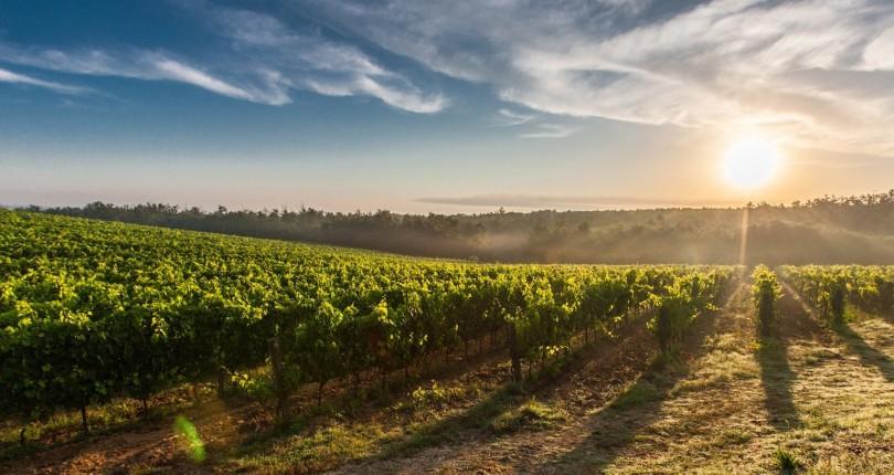Neue Wege – Weinanbau auf Sylt